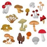 Fresh autumn mushrooms and toadstools cartoon vector set Stock Photography