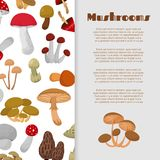 Fresh autumn mushrooms and toadstools Stock Images