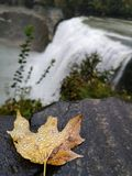 Fresh autumn near the fall royalty free stock photo