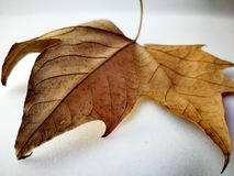 Fresh. Autumn season and photography Royalty Free Stock Images