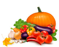 Fresh autumn vegetable with leaves royalty free illustration