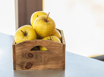 Fresh autumn yellow apples Royalty Free Stock Image