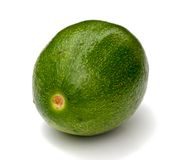 Fresh avocado. Royalty Free Stock Image