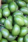Fresh avocado. Stock Photos