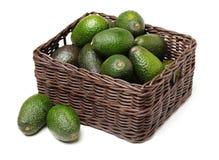 Fresh avocado fruit. Isolated on white background Royalty Free Stock Photo