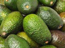 Fresh avocado fruit. Isolated on white background Royalty Free Stock Photography