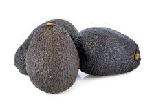 Fresh avocado fruits Stock Image