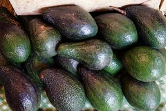Fresh avocado for sale at market. Avocados are very nutritious and contain a wide variety of nutrients Royalty Free Stock Photo