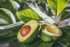 Fresh avocado with avocado tree leaves. Close up.  royalty free stock photography