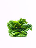 Fresh baby bok choy, brassica rapa chinensis,  isolated on white Stock Images