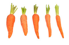 Fresh baby carrot Royalty Free Stock Images