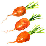 The fresh baby carrot on white background Royalty Free Stock Photos