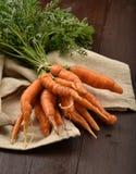 Fresh baby carrots Stock Photos