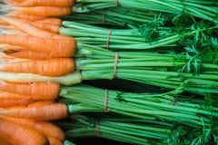 Fresh baby carrots Royalty Free Stock Photo