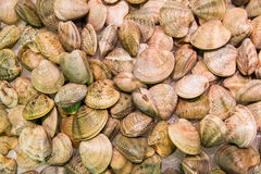 Fresh baby clams. For sale in local market in Madrid.Seafood background Stock Photos
