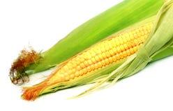 Fresh baby corn Stock Photography
