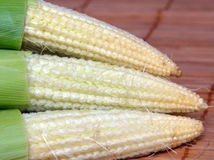 Fresh baby corn closeup. Fresh baby corn closeup on wood royalty free stock images