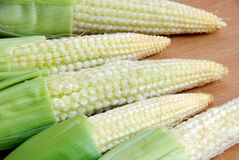 Fresh baby corn closeup. Fresh baby corn closeup on wood stock photos