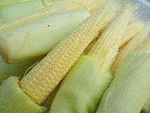 Fresh  Baby corn preparing for cooking Royalty Free Stock Photography