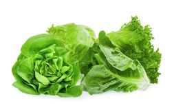 Fresh baby cos, frillice, iceberg and butter lettuce isolated on white stock photos