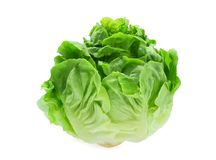 Fresh baby cos, green lettuce isolated on white. Background stock photography
