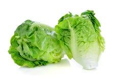 Fresh baby cos (lettuce) Royalty Free Stock Photos