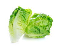 Fresh baby cos (lettuce) Royalty Free Stock Photography