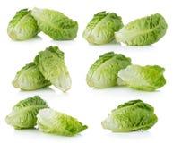Fresh baby cos (lettuce) on white background Stock Images