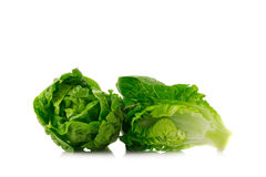 Fresh baby cos lettuce on white background stock photography