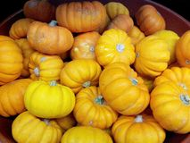 Fresh Baby Pumpkins Royalty Free Stock Images