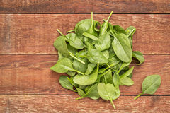 Fresh baby spinach leaves Stock Images