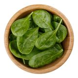 Fresh baby spinach leaves royalty free stock photography
