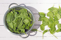 Fresh baby spinach in the stainer on the white background Royalty Free Stock Photo
