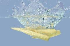 Fresh babycorn splashing into water. In gray background Royalty Free Stock Images