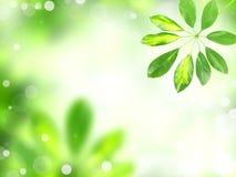Fresh background Stock Image