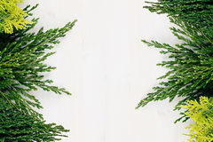 Fresh background of young green conifer branches as border with copy space on white wooden board background. Royalty Free Stock Photo