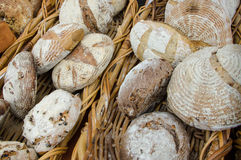 Fresh baked breads in a basket. Close up of fresh baked breads in a basket Royalty Free Stock Image