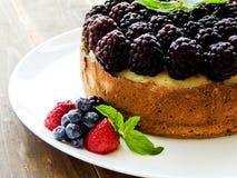 Fresh baked cheesecake Stock Image