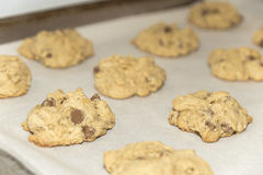Fresh baked chocolate chip cookies fresh out of the oven on a ba Royalty Free Stock Photos