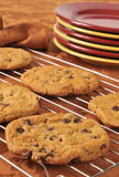 Fresh baked chocolate chip cookies Stock Image