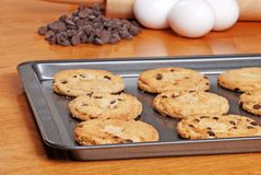Fresh baked cookies on a cookie sheet Stock Image