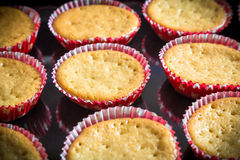 Fresh baked cupcakes Royalty Free Stock Images