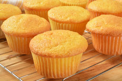 Fresh baked cupcakes Stock Images