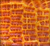 Fresh baked goods - muffins ruddy appetizing Royalty Free Stock Image