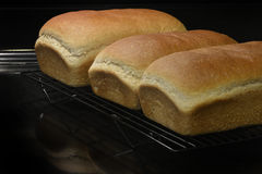Fresh Baked Homemade Bread Cooking Off on Racks Royalty Free Stock Images