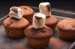 Fresh baked muffins with marshmallows. And cocoa powder royalty free stock image
