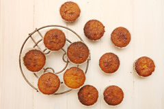Fresh baked muffins Royalty Free Stock Photos
