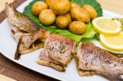 Fresh baked pike Stock Images