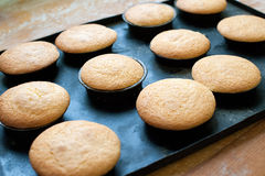 Fresh Baked Plain Muffins Cooling on Baking Pan Stock Photography
