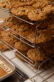 Fresh Baked Rows Layers Oatmeal Chocolate Chip Cookie Rack Royalty Free Stock Image